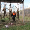 some of the deer shot.