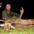 Trophy quality Fallow deer hunt in Hungary