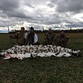 100 snow geese in 1 morning October 2014
