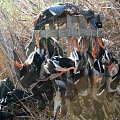 Duck hunting over decoys