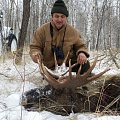 My first moose in Russia